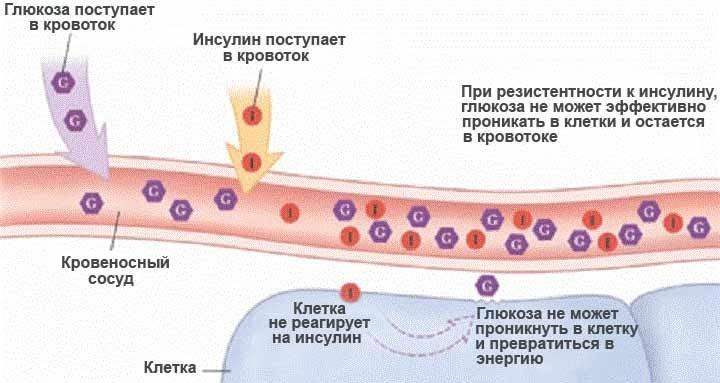 Глюкон средство от диабета 147 руб. | Обзор